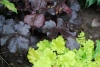 Alunrot Obsidian Lime Rickey